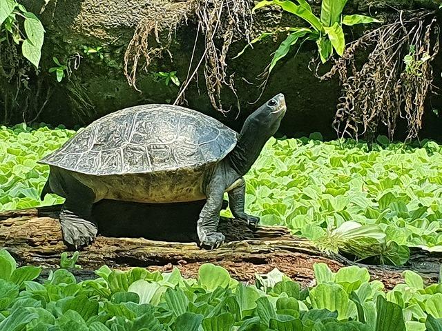 家族連れでも、おひとりさまでも楽しめる台北市立動物園♪_b0182708_20432613.jpg