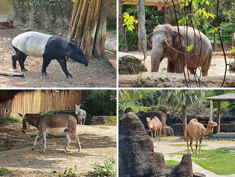 家族連れでも、おひとりさまでも楽しめる台北市立動物園♪_b0182708_20433177.jpg