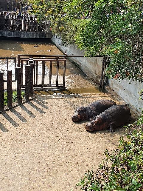家族連れでも、おひとりさまでも楽しめる台北市立動物園♪_b0182708_20433798.jpg