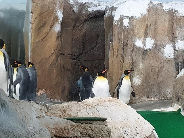 家族連れでも、おひとりさまでも楽しめる台北市立動物園♪_b0182708_20434318.jpg