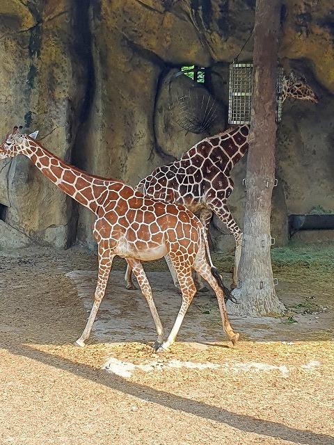 家族連れでも、おひとりさまでも楽しめる台北市立動物園♪_b0182708_20434765.jpg