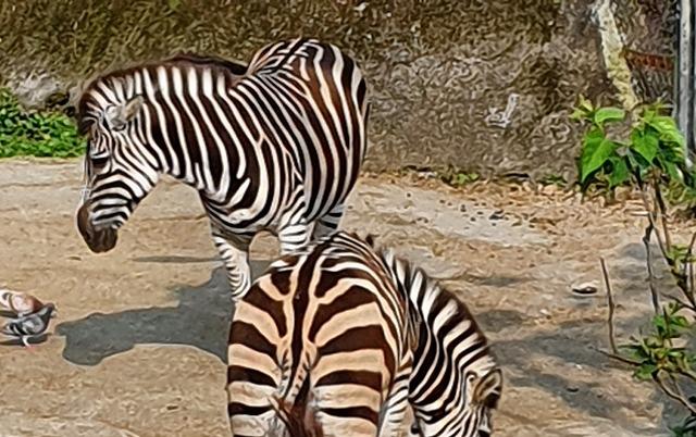 家族連れでも、おひとりさまでも楽しめる台北市立動物園♪_b0182708_21283766.jpg