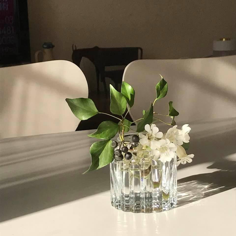 ベランダに咲いた白い花「シレネ」_c0186612_10102458.jpg