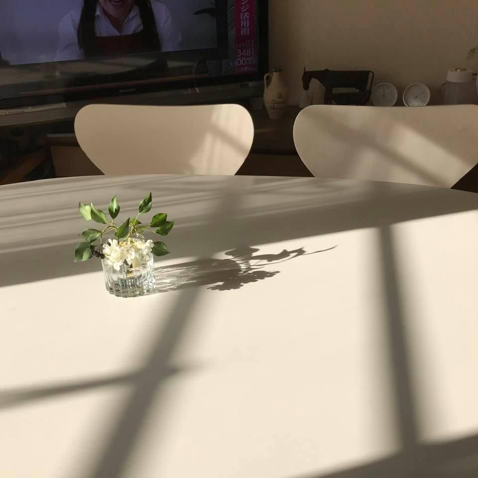 ベランダに咲いた白い花「シレネ」_c0186612_10110152.jpg