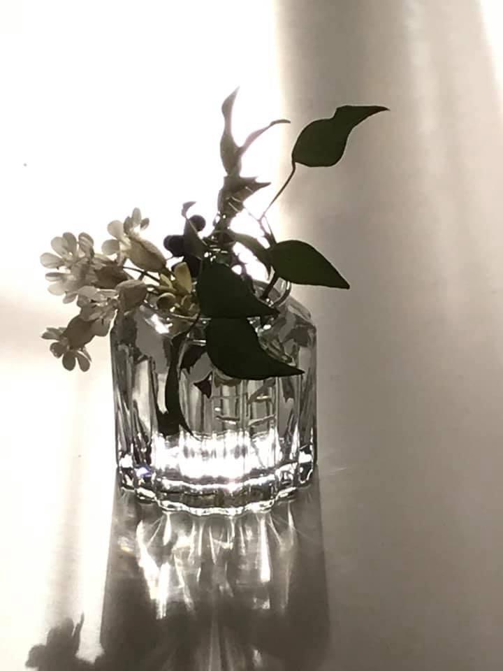 ベランダに咲いた白い花「シレネ」_c0186612_10122751.jpg