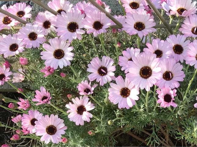 庭の花_b0157216_16504009.jpg