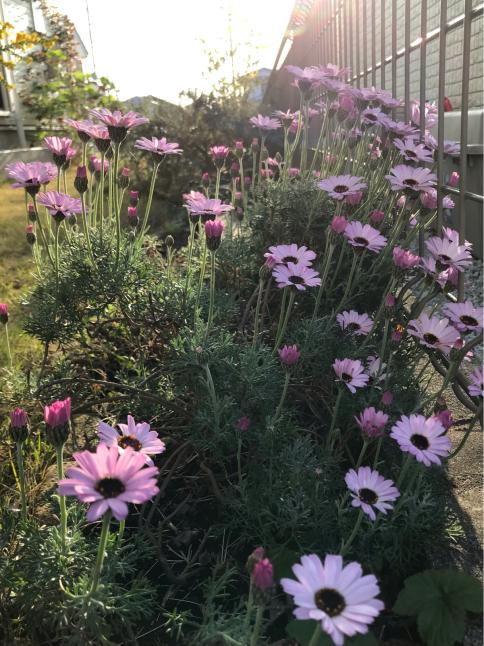 庭の花_b0157216_16504157.jpg