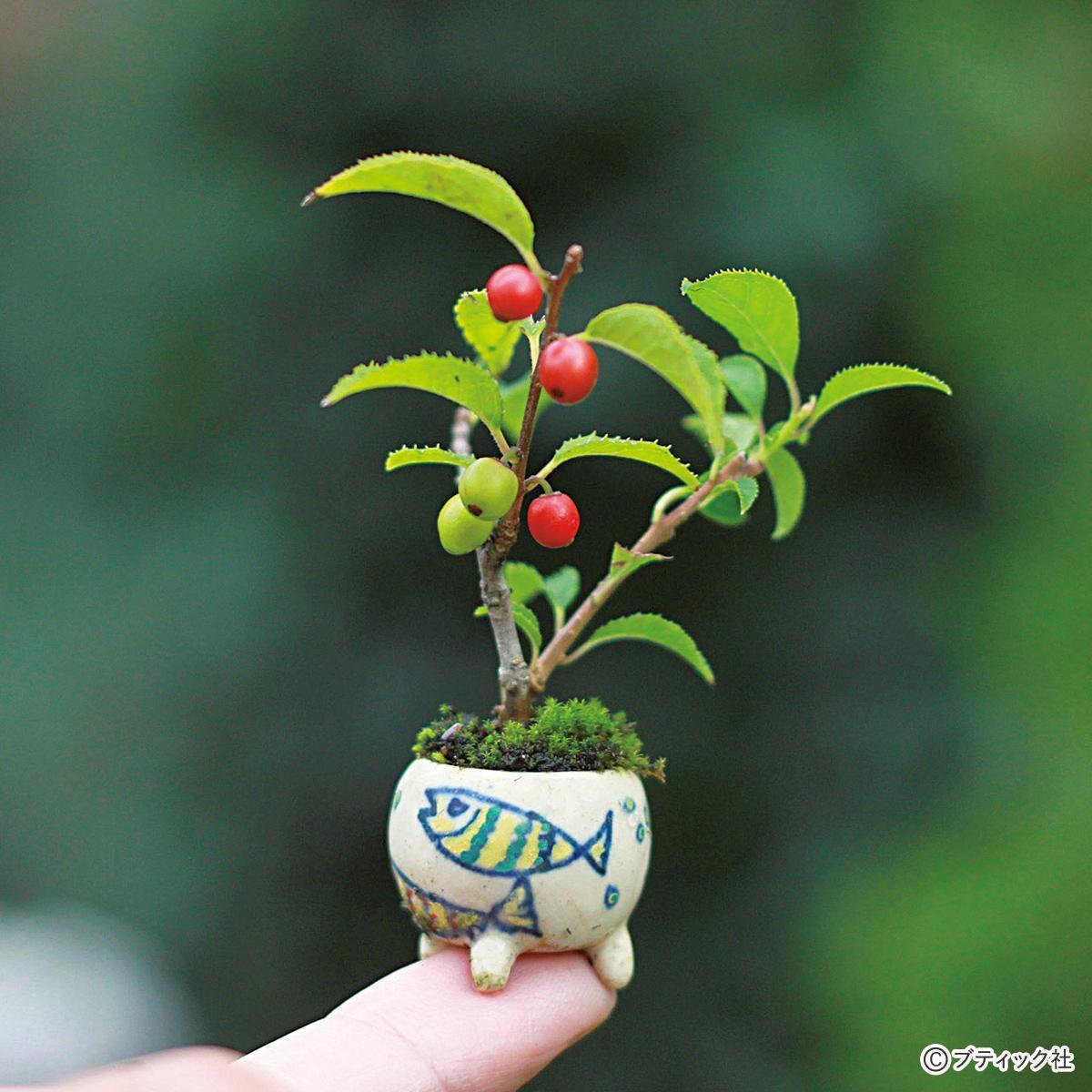 人魚楼日記 植物の世界が扉を開く 盆栽村に行きたい!_e0016517_21383683.jpg