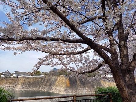 その後(葉桜の季節)_d0041427_18580388.jpg