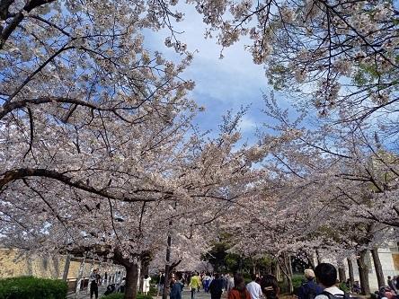 その後(葉桜の季節)_d0041427_18580861.jpg