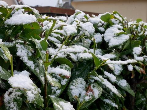 雪のイースター_f0210340_06072548.jpg