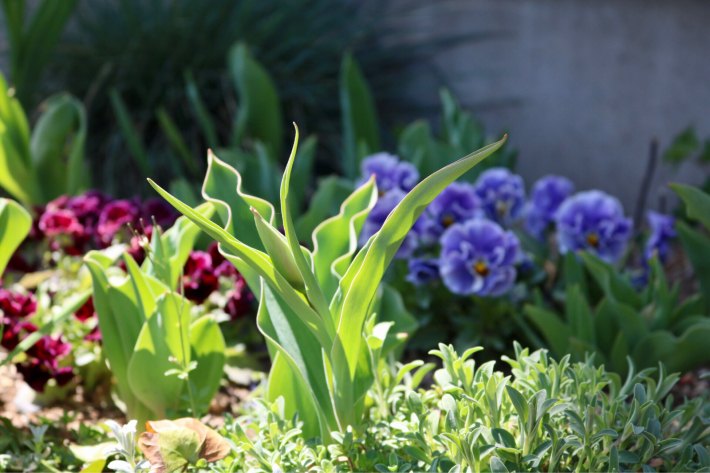 花壇周りを飾る_c0359445_20502633.jpg