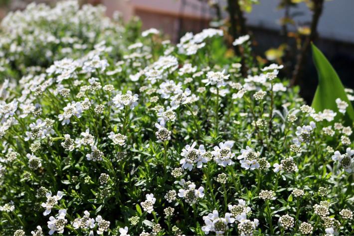 花壇周りを飾る_c0359445_20502884.jpg