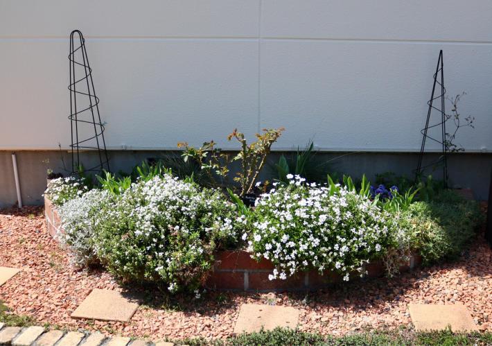 花壇周りを飾る_c0359445_20502948.jpg