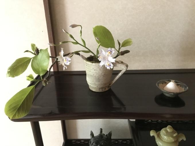 真昼の庭 うち猫そと猫_d0101846_06443757.jpeg