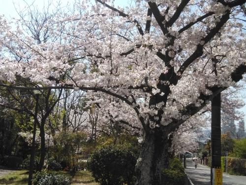 花見@枚方市から京都府八幡市へ_f0395164_22050977.jpg