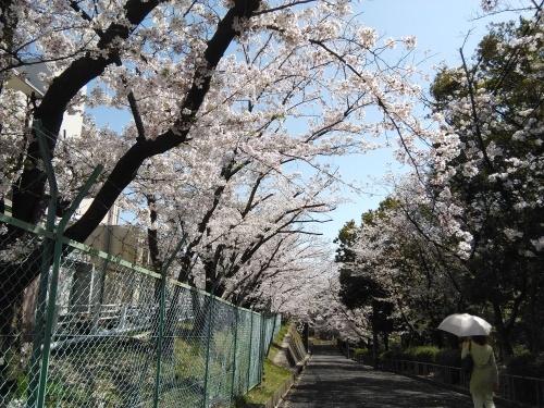 花見@枚方市から京都府八幡市へ_f0395164_22085067.jpg