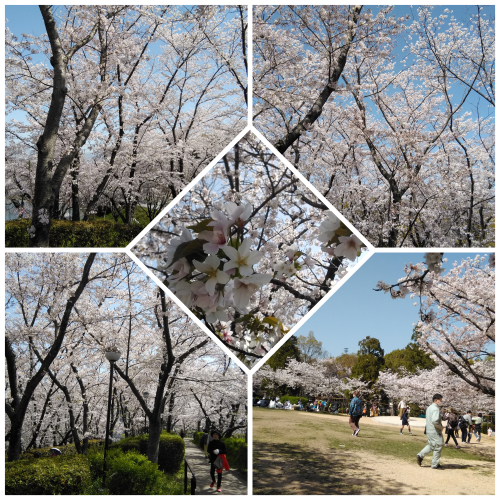 花見@枚方市から京都府八幡市へ_f0395164_22170541.jpg