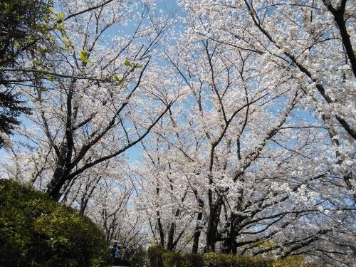 花見@枚方市から京都府八幡市へ_f0395164_22293172.jpg
