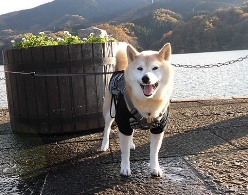 凜と一緒の旅行記の索引_e0023790_11330624.jpg