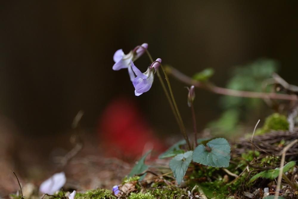 2021 03 30 お花見ついでの探鳥は坊主と思いきやかろうじて・・・。_a0143491_21201996.jpg