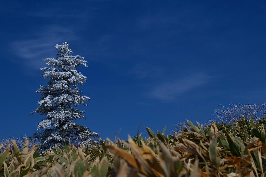 霧氷のイチャンコッペ山、2021.4.7_f0138096_21321602.jpg