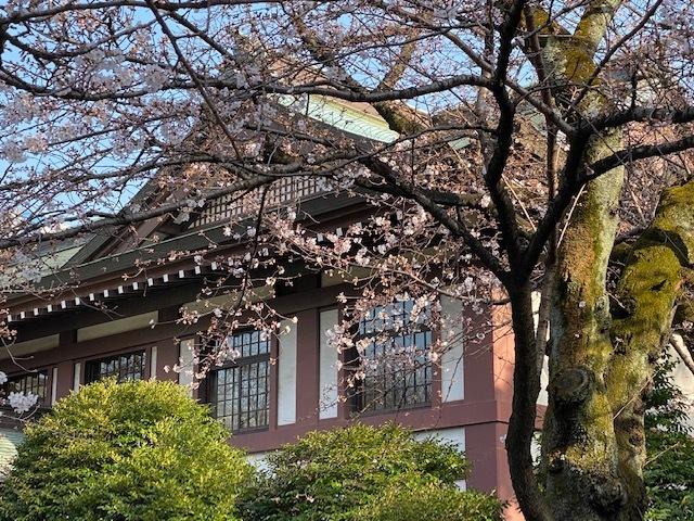 2021年の桜_b0129897_04405783.jpg