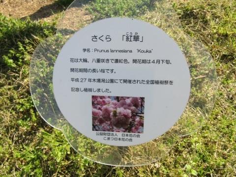 名残のさくら ~ 木場潟公園_f0281398_21524242.jpg