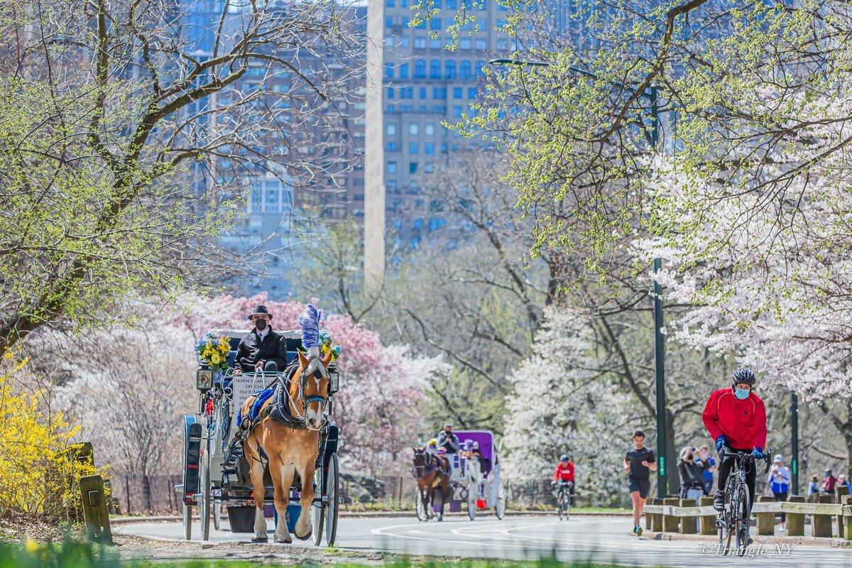 春が来た_a0274805_09075201.jpg