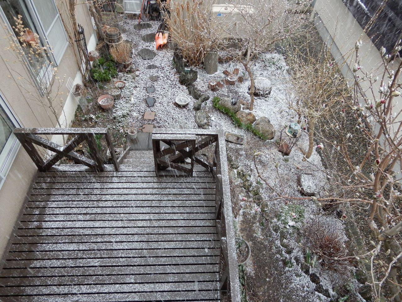 雪景色が戻ってきた_c0025115_21541583.jpg