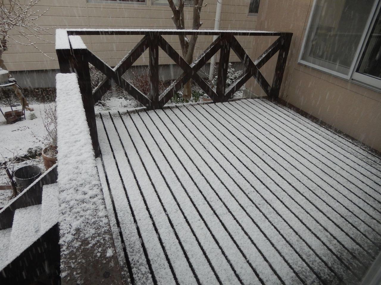 雪景色が戻ってきた_c0025115_21543241.jpg