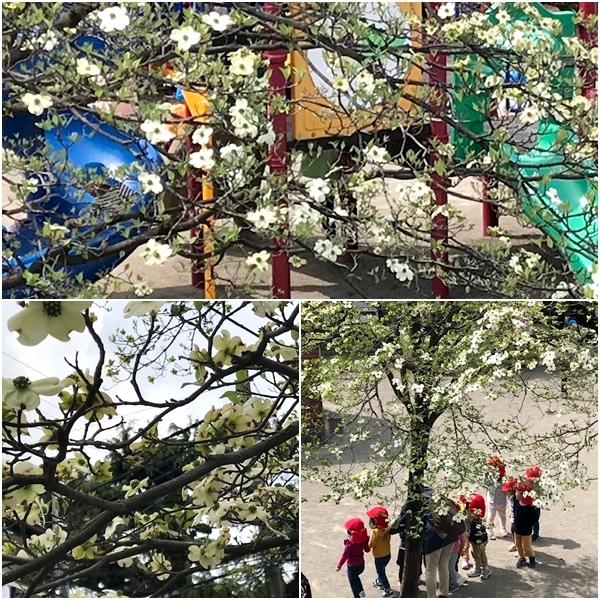 今年の…我が家の春の風景~_c0079828_23234622.jpg