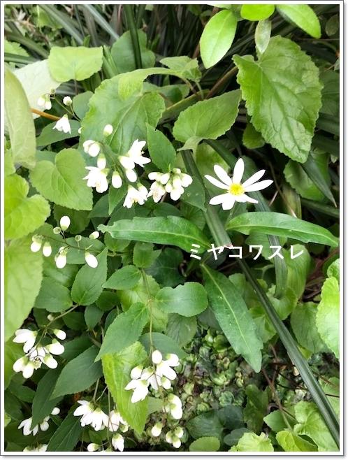 今年の…我が家の春の風景~_c0079828_23254733.jpg