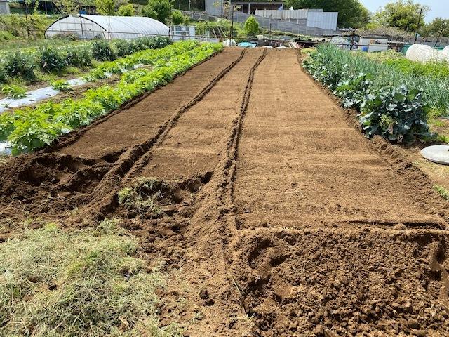 トマトの畝 バジルの畝作り 始めます_c0222448_14003104.jpg