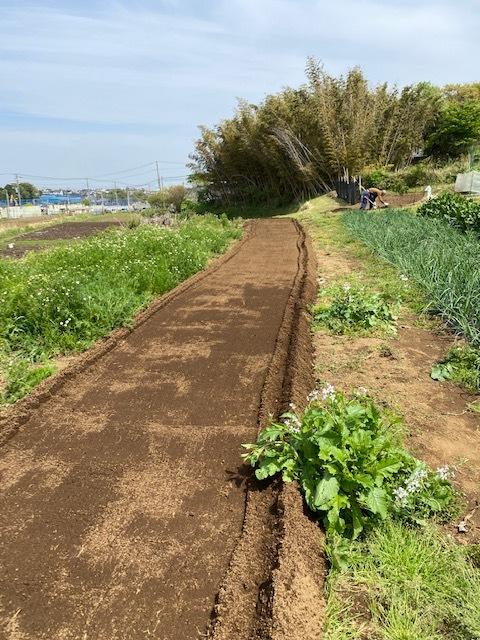 トマトの畝 バジルの畝作り 始めます_c0222448_14004099.jpg