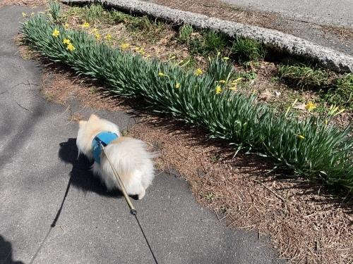 春の散歩道〜_e0248949_20153485.jpeg