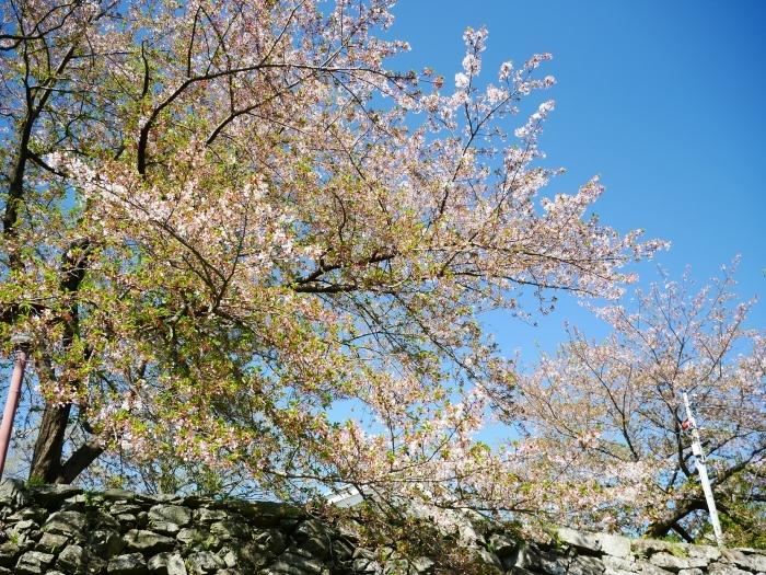 桜からつつじへそして新緑へ  2021-04-09 00:00_b0093754_22124941.jpg
