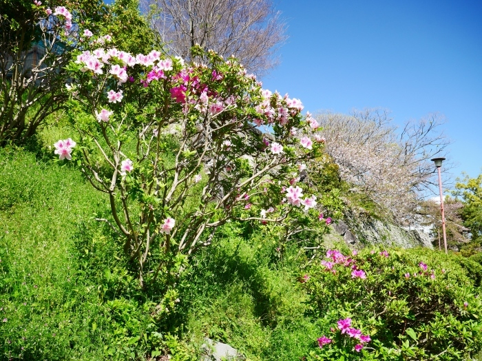 桜からつつじへそして新緑へ  2021-04-09 00:00_b0093754_22130337.jpg