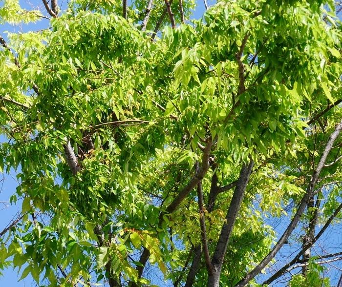 桜からつつじへそして新緑へ  2021-04-09 00:00_b0093754_22135267.jpg