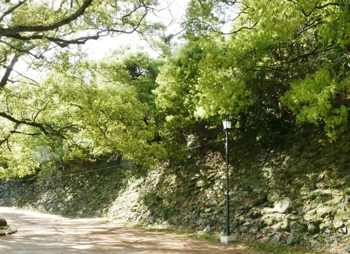 桜からつつじへそして新緑へ  2021-04-09 00:00_b0093754_22140341.jpg