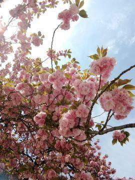 花まつり_a0061057_20320458.jpg