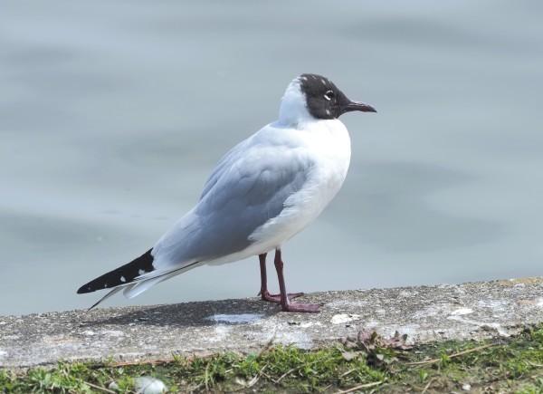 4月の野鳥調査で出会った鳥たち。_d0121678_16281474.jpg