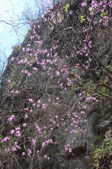 春の妙義山_d0138986_19181541.jpeg