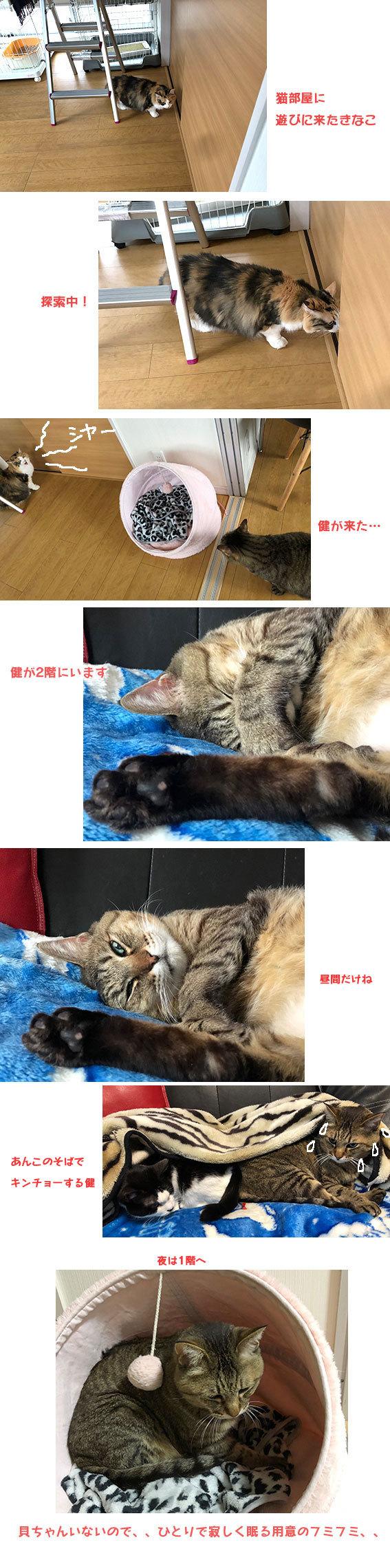 健ときなことあんこと貝ちゃん&フックちゃん_d0071596_23585514.jpg