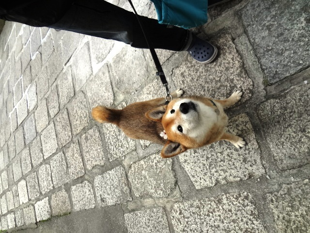 怖がりすぎなのか/ケンは心落ち着かせてくれる犬_c0221299_18483509.jpg