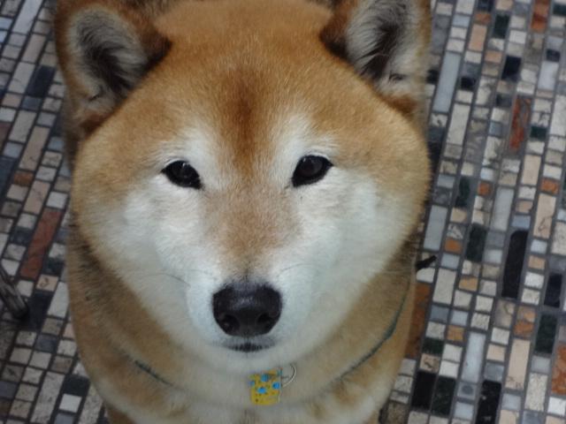 怖がりすぎなのか/ケンは心落ち着かせてくれる犬_c0221299_18490596.jpg