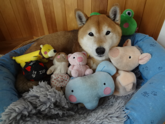 怖がりすぎなのか/ケンは心落ち着かせてくれる犬_c0221299_18494561.jpg