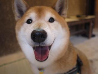 怖がりすぎなのか/ケンは心落ち着かせてくれる犬_c0221299_18505285.jpg