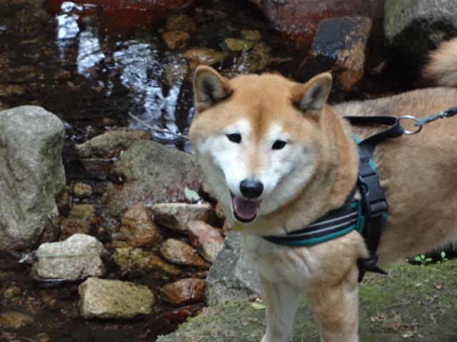 怖がりすぎなのか/ケンは心落ち着かせてくれる犬_c0221299_18523428.jpg