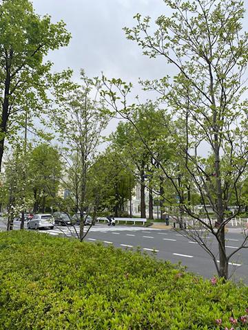 AKASAKA PALACE:迎賓館赤坂離宮_f0038600_21360604.jpg